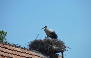 Störche Nest Kinder